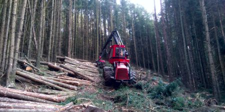 Forestry Management