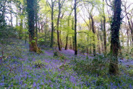 Forestry Operations Devon