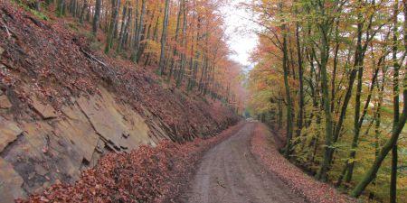 Forestry Strategic Profile