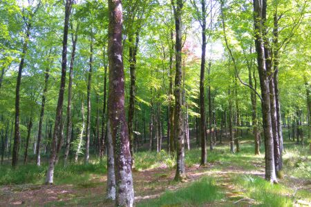 Woodland Ecology, Protected Species and Habitat Management